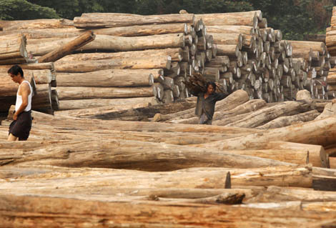 Image for article New rules on Burmese Teak imports already affecting market