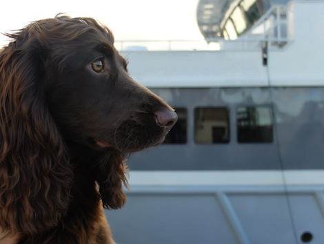 Image for article Bespoke superyacht veterinary service launched