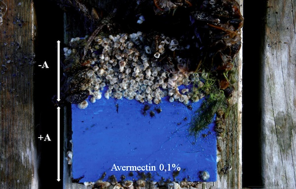 Image for article Low-emission anti-fouling research shows  progress